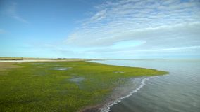 Ακτή λιμνών με το φύκι απόθεμα βίντεο