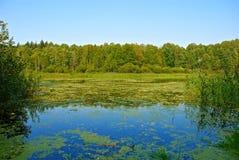 ακτή λιμνών Στοκ Εικόνα