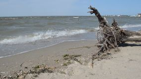 Ακτή Μαύρης Θάλασσας απόθεμα βίντεο