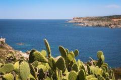 Ακτή με τα succulents Στοκ Φωτογραφίες