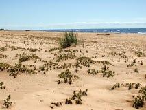 Ακτή με την άμμο και τις εγκαταστάσεις στοκ εικόνες με δικαίωμα ελεύθερης χρήσης
