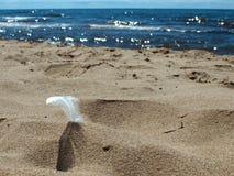 Ακτή με την άμμο και το φτερό στοκ φωτογραφίες με δικαίωμα ελεύθερης χρήσης