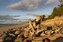 Ακτή με τη ρίζα Στοκ φωτογραφία με δικαίωμα ελεύθερης χρήσης