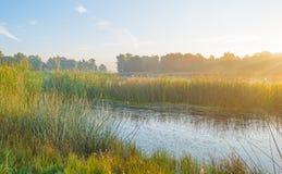 Ακτή μιας λίμνης στην ανατολή Στοκ φωτογραφίες με δικαίωμα ελεύθερης χρήσης