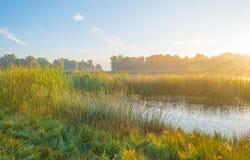 Ακτή μιας λίμνης στην ανατολή Στοκ φωτογραφία με δικαίωμα ελεύθερης χρήσης