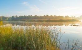Ακτή μιας λίμνης στην ανατολή Στοκ εικόνες με δικαίωμα ελεύθερης χρήσης