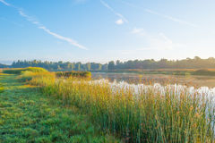 Ακτή μιας λίμνης στην ανατολή Στοκ εικόνα με δικαίωμα ελεύθερης χρήσης