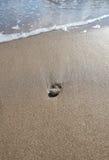 Ακτή παραλιών με το κοχύλι Στοκ εικόνα με δικαίωμα ελεύθερης χρήσης