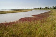 Ακτή ποταμών, άγρια φύση στοκ εικόνες με δικαίωμα ελεύθερης χρήσης