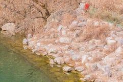 Ακτή ποταμών των λίθων και των βράχων Στοκ φωτογραφίες με δικαίωμα ελεύθερης χρήσης