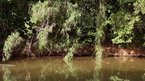 Ακτή ποταμών απόθεμα βίντεο