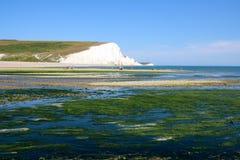 Ακτή στενών της Αγγλίας στα άλγη στοκ φωτογραφίες