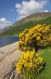 Ακτή της λίμνης στην ορεινή περιοχή, Σκωτία Στοκ φωτογραφία με δικαίωμα ελεύθερης χρήσης