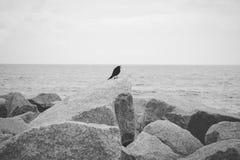 Ακτή της βόρειας Καρολίνας Στοκ Εικόνες