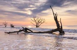 Ακτή της νότιας Καρολίνας Boneyard Τσάρλεστον κόλπων βοτανικής Στοκ εικόνα με δικαίωμα ελεύθερης χρήσης