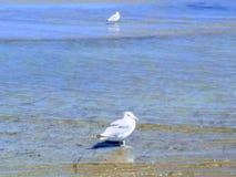 Ακτή της Azov θάλασσας στοκ φωτογραφίες με δικαίωμα ελεύθερης χρήσης