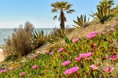 Ακτή του Αλγκάρβε στην Πορτογαλία Λάγκος, Faro, Albufeira στοκ φωτογραφία με δικαίωμα ελεύθερης χρήσης