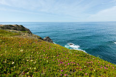 Ακτή του θερινού Ατλαντικού Ωκεανού (Αλγκάρβε, Πορτογαλία) Στοκ φωτογραφία με δικαίωμα ελεύθερης χρήσης