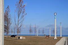 Ακτή του Μίτσιγκαν λιμνών με τα σκυλιά λίθων που παίζουν στο πάρκο Στοκ φωτογραφία με δικαίωμα ελεύθερης χρήσης