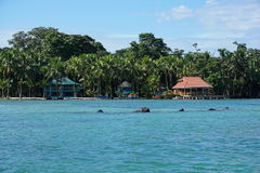 Ακτή του νησιού Carenero σε Bocas del Toro Παναμάς Στοκ φωτογραφίες με δικαίωμα ελεύθερης χρήσης