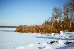 Ακτή του ποταμού στο χιόνι με τους καλάμους και τα δέντρα - χειμερινό τοπίο Στοκ φωτογραφίες με δικαίωμα ελεύθερης χρήσης