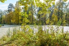Ακτή του ποταμού Στοκ εικόνες με δικαίωμα ελεύθερης χρήσης