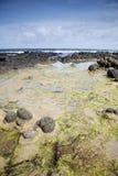Ακτή υπερυψωμένων μονοπατιών γιγάντων, κομητεία  Antrim Στοκ εικόνα με δικαίωμα ελεύθερης χρήσης
