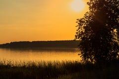 ακτή φύλλων λιμνών λουλουδιών αφαίρεσης Στοκ Εικόνες
