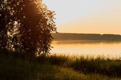 ακτή φύλλων λιμνών λουλουδιών αφαίρεσης Στοκ φωτογραφία με δικαίωμα ελεύθερης χρήσης