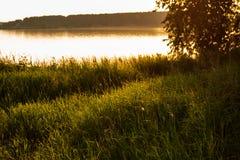 ακτή φύλλων λιμνών λουλουδιών αφαίρεσης Στοκ Φωτογραφία