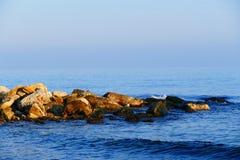 Ακτή χειμερινής θάλασσας wilde Στοκ Φωτογραφίες