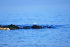 Ακτή χειμερινής θάλασσας wilde Στοκ φωτογραφία με δικαίωμα ελεύθερης χρήσης
