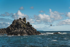 ακτή Όρεγκον δύσκολο Στοκ φωτογραφία με δικαίωμα ελεύθερης χρήσης