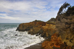ακτή Όρεγκον στοκ εικόνες με δικαίωμα ελεύθερης χρήσης
