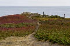 Ακτή Bodega Στοκ Εικόνες