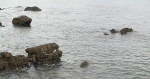 Ακτή Cantabric με seagulls στους βράχους απόθεμα βίντεο