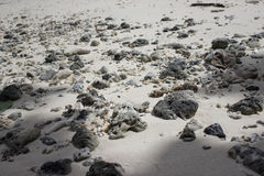 Ακτή llife Στοκ Φωτογραφίες