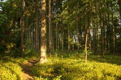ακτίνα ηλιόλουστη Στοκ φωτογραφία με δικαίωμα ελεύθερης χρήσης