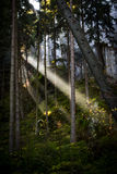 Ακτίνα του φωτός του ήλιου Στοκ φωτογραφία με δικαίωμα ελεύθερης χρήσης