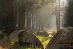 Ακτίνα του φωτός Στοκ φωτογραφία με δικαίωμα ελεύθερης χρήσης
