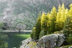 Ακτίνα των φω'των πέρα από τα δέντρα Στοκ Εικόνες