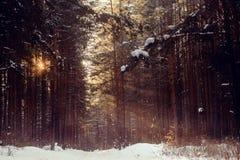 Ακτίνα ` s το misty χειμερινό πρωί, οι ακτίνες ήλιων ` στο δάσος Στοκ Εικόνες