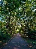 Ακτίνες ήλιων πάρκων άνοιξη Στοκ εικόνα με δικαίωμα ελεύθερης χρήσης