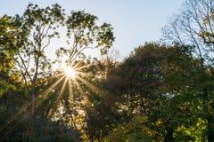 Ακτίνες ήλιων που έρχονται μέσω των δέντρων σε ένα πάρκο Στοκ εικόνες με δικαίωμα ελεύθερης χρήσης