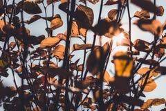 Ακτίνες ήλιων που λάμπουν μέσω των ζωηρόχρωμων φύλλων φθινοπώρου στοκ φωτογραφίες