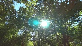Ακτίνες ήλιων που σπάζουν μέσω των κλάδων δέντρων απόθεμα βίντεο