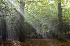 Ακτίνες ήλιων στο δάσος στοκ φωτογραφία με δικαίωμα ελεύθερης χρήσης