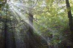 Ακτίνες ήλιων στο δάσος στοκ εικόνα