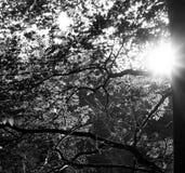 Ακτίνες ήλιων μέσω του δέντρου στοκ εικόνα με δικαίωμα ελεύθερης χρήσης