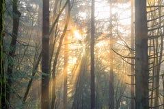 Ακτίνες ήλιων μέσω των δέντρων Στοκ εικόνα με δικαίωμα ελεύθερης χρήσης